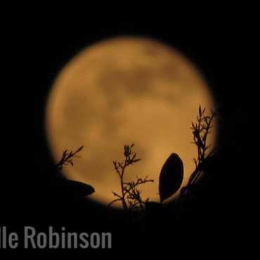 Amazing image taken by my friend Michelle Robinson