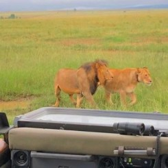 Incredible safari pictures taken by my friend Alex Bliss